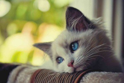 sad cat whatsapp very sad dp