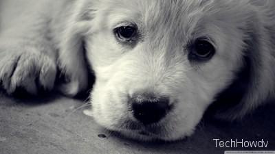sad dp images sad eyes